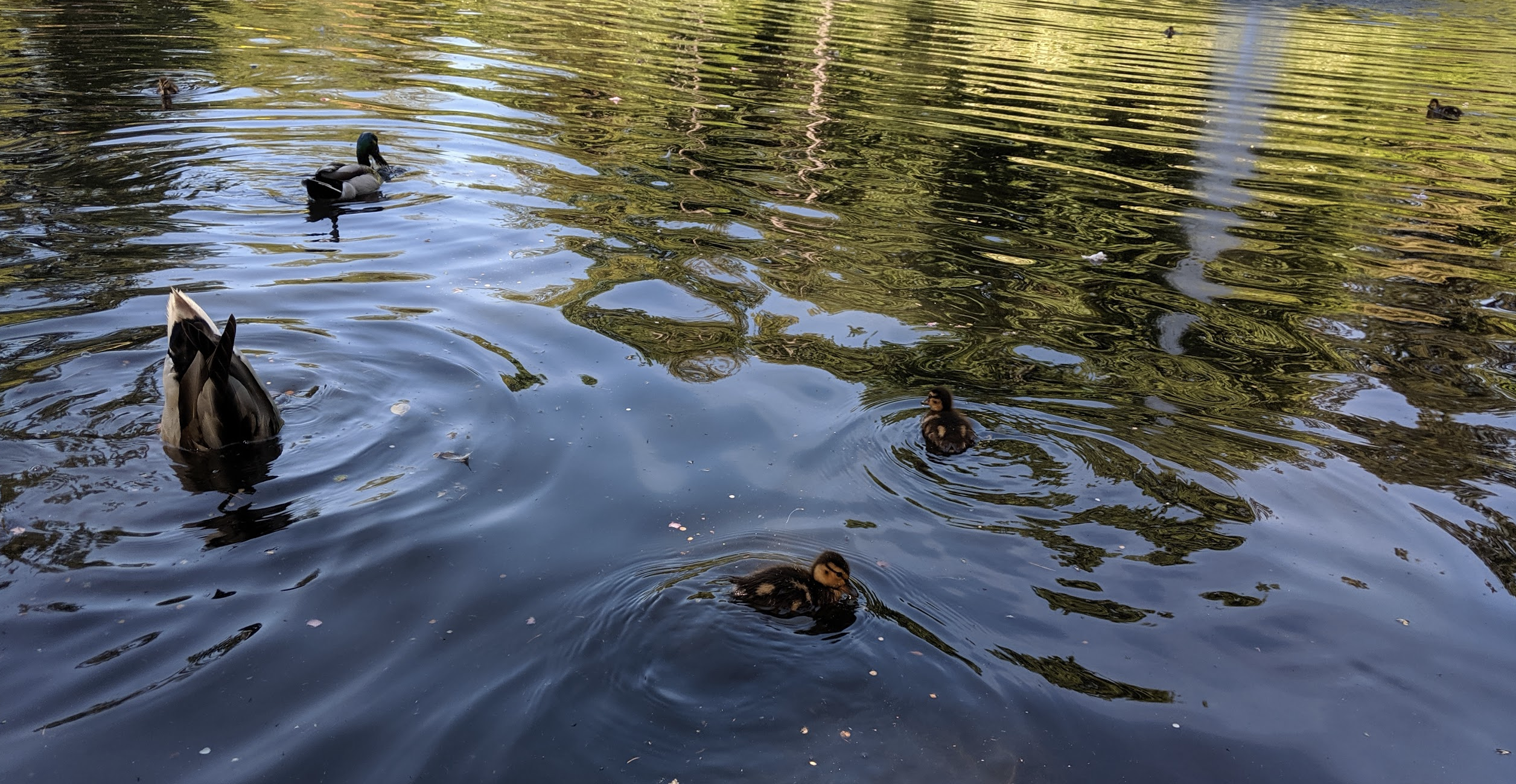 My editor Justin saw some ducks once; it was alright